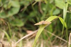 Mariposa en una hoja verde Imagenes de archivo