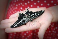 Mariposa en una mano Foto de archivo