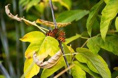 Mariposa en una ramificación Fotografía de archivo