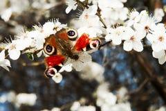 Mariposa en una ramificación Fotografía de archivo libre de regalías