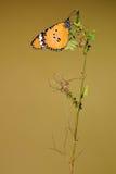 Mariposa en una ramita Imágenes de archivo libres de regalías