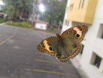 Mariposa en ventana Foto de archivo libre de regalías