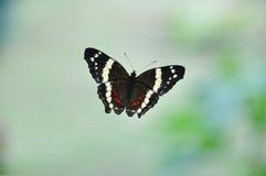 Mariposa en ventana Fotos de archivo libres de regalías