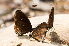 Mariposa en verano Foto de archivo