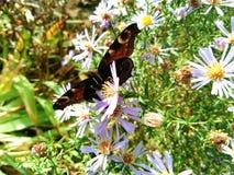 mariposa en wildflowers en un fondo de la hierba verde Fotografía de archivo