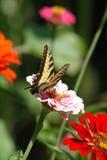 Mariposa encaramada en la flor Fotografía de archivo