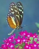 Mariposa encaramada en una flor Fotos de archivo