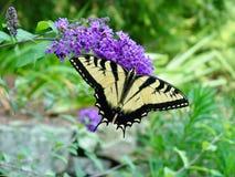 Mariposa encendido Imagen de archivo libre de regalías