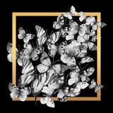 Mariposa enmarcada, ejemplo de la acuarela stock de ilustración