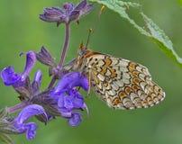 mariposa entre las flores Imagen de archivo