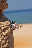 Mariposa exótica Fotos de archivo