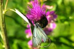 Mariposa Flor salvaje Foto de archivo libre de regalías