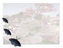 Mariposa floral Foto de archivo