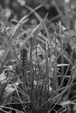 Mariposa futura de Swallowtail Foto de archivo