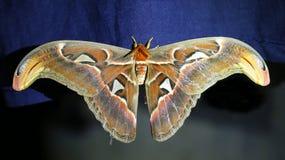 Mariposa grande Foto de archivo