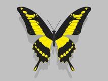 Mariposa grande con las alas negras, modelos amarillos Foto de archivo