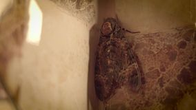 Mariposa grande en el cuarto de ba?o libre illustration