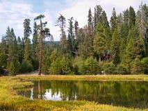 Mariposa Grove Redwoods. Yosemite National Park - Mariposa Grove Redwoods Royalty Free Stock Images