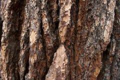 Mariposa Grove Texture stock photo