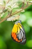 Mariposa hermosa Imágenes de archivo libres de regalías