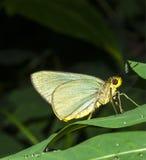 Mariposa hermosa Imagen de archivo libre de regalías