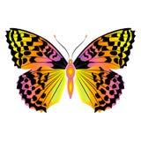Mariposa hermosa brillante Ilustración del vector aislada