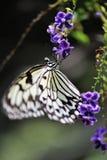 Mariposa hermosa en la flor Fotos de archivo libres de regalías