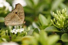 Mariposa hermosa en la flor colorida Foto de archivo libre de regalías