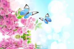 Mariposa hermosa en la flor rosada, fondo del cielo fotografía de archivo