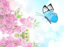 Mariposa hermosa en la flor rosada, fondo del cielo imagenes de archivo