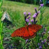 Mariposa hermosa en prado Fotos de archivo