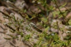 Mariposa hermosa en una flor Fotografía de archivo libre de regalías