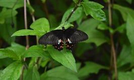 Mariposa hermosa en una hoja en un jardín fotos de archivo libres de regalías