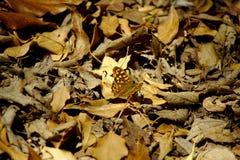 Mariposa hermosa entre las hojas Imagen de archivo