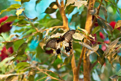 Mariposa hermosa espectacular en la hoja de una planta Imagen de archivo libre de regalías