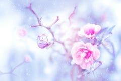 Mariposa hermosa fantástica en las rosas rosadas en la imagen artística de la Navidad de la nieve y de la helada imagen de archivo