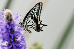 Mariposa hermosa por la charca fotos de archivo