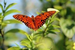Mariposa hermosa que se sienta en la flor en luz del sol Imagen de archivo libre de regalías
