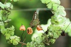 Mariposa hermosa y flor preciosa en fondo de la luz natural Fotos de archivo libres de regalías
