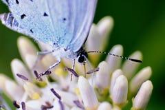 mariposa Hilo de araña-coa alas Foto de archivo libre de regalías