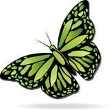 Mariposa ideal colorida Imagenes de archivo