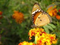 Mariposa, jardín de la primavera Foto de archivo