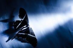 Mariposa ligera fotografía de archivo