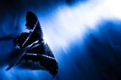 Mariposa ligera fotos de archivo libres de regalías
