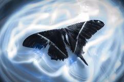 Mariposa ligera foto de archivo