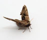Mariposa linda y colorida Fotos de archivo