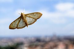 Mariposa. Lodged in a dirty glass stock photo