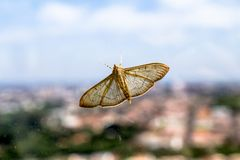 Mariposa. Lodged in a dirty glass stock photos