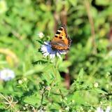 Mariposa magnífica y flor hermosa en la hierba fotografía de archivo