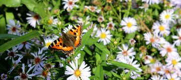 Mariposa magnífica y flores hermosas en la hierba imágenes de archivo libres de regalías